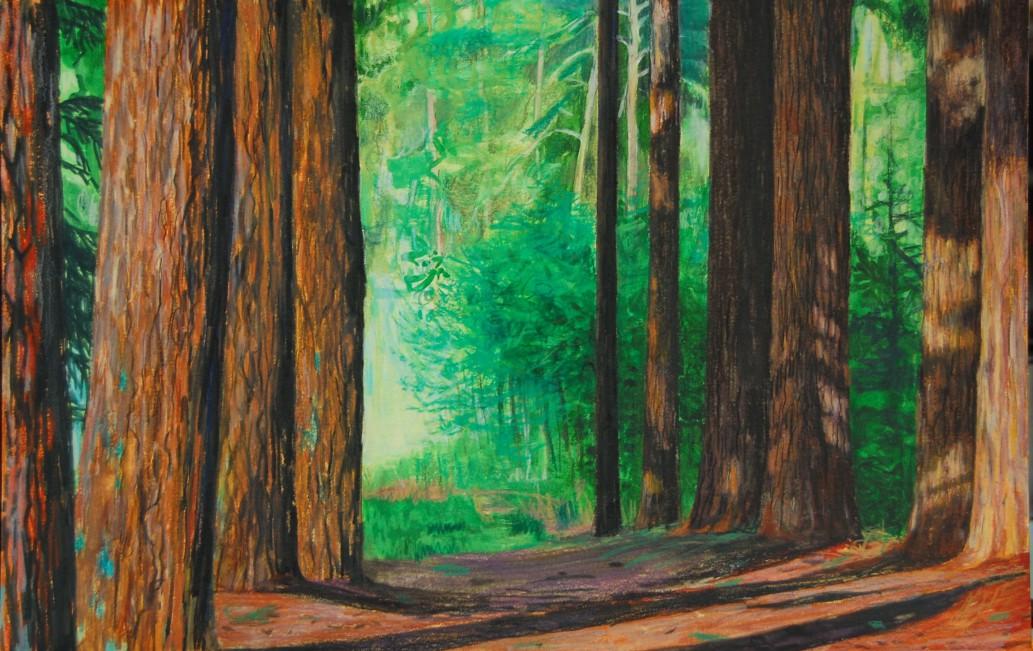 Douglaslaan schaduwvlekken, 2012 21 x 31 cm